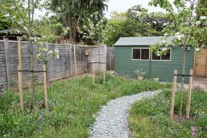 Wild flower garden Minehead