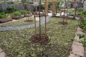 Planting the wild flower garden